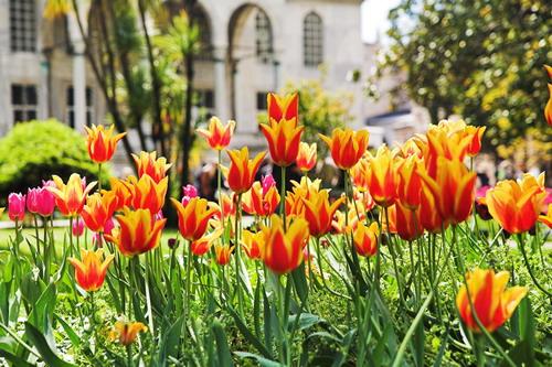 В Стамбул – за ароматом тюльпанов!
