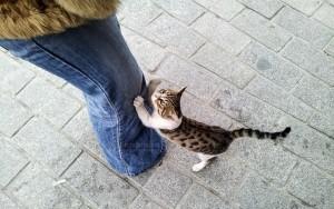 Кошки Турции под защитой!